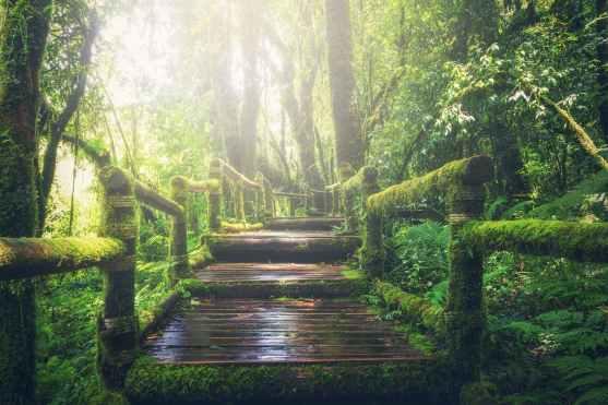 adventure beautiful boardwalk bridge